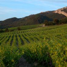 Vignoble Coteau Machotte